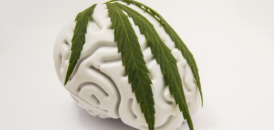 CBD og hjernen: Kan CBD olie beskytte hjernen mod skader og sygdomme?
