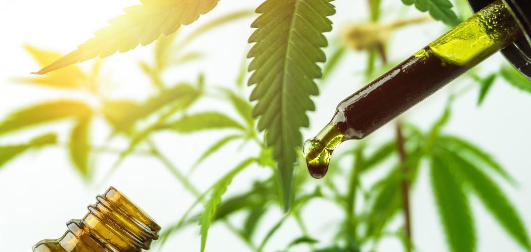 CBD oliens mange gavnlige egenskaber